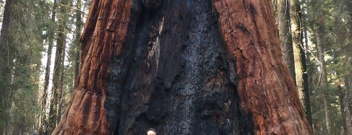 Grant Grove, Kings Canyon is one of Posti salvati di Lena.