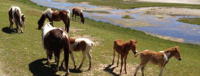 Chincoteague National Wildlife Refuge Loop is one of Trips & Activities.