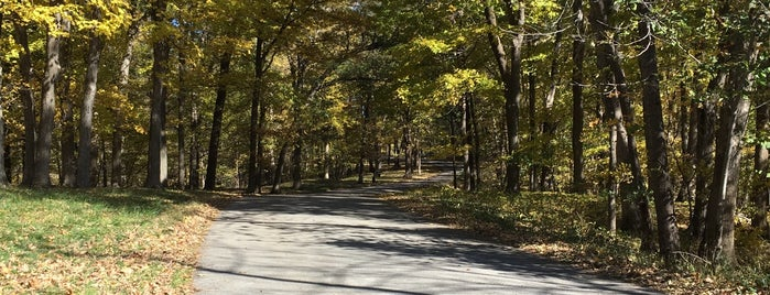 Palisades-Kepler State Park is one of Iowa.