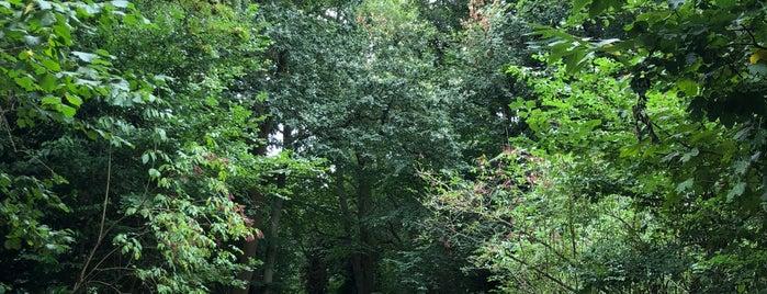 Scadbury Park Nature Reserve is one of London Loop.