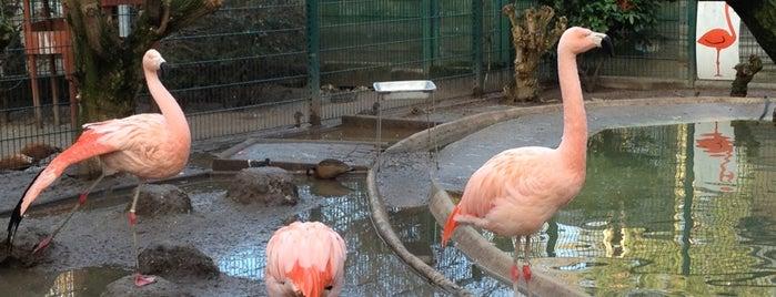 Le Zoo de l'Orangerie is one of Orte, die Fusun gefallen.