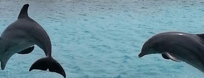 Curaçao Sea Aquarium is one of Loredana's Liked Places.