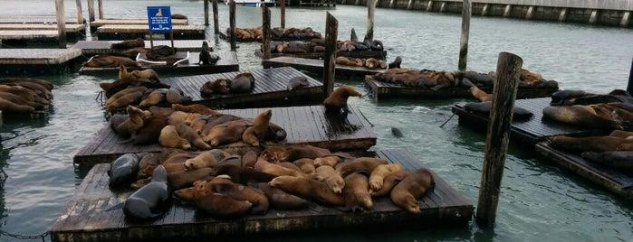 Pier 39 Marina is one of San Francisco Bay.