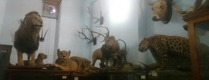 Зоологічний музей ДНУ is one of Posti salvati di Катерина.