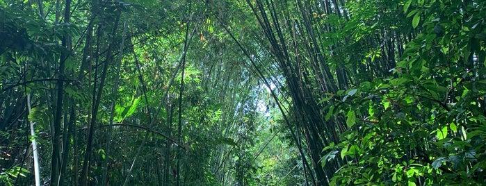Khun Korn Waterfall is one of Chiang Rai.