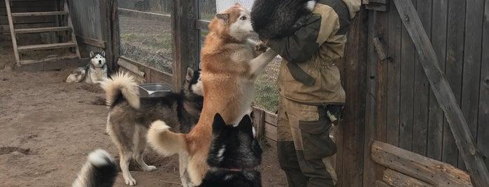«Северная Надежда» Питомник Ездовых Собак is one of Vicky 님이 좋아한 장소.