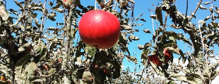 Ratzlaff Apple Farm is one of Sebastopol Getaway.
