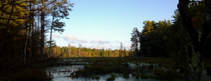 Assabet River National Wildlife Refuge is one of Irene's Liked Places.