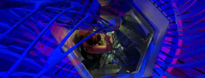 Meow Wolf is one of New Mexico!.