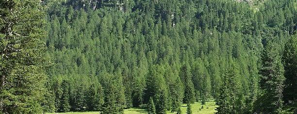 Ski Area Alpe Lusia is one of Attività per sportivi.
