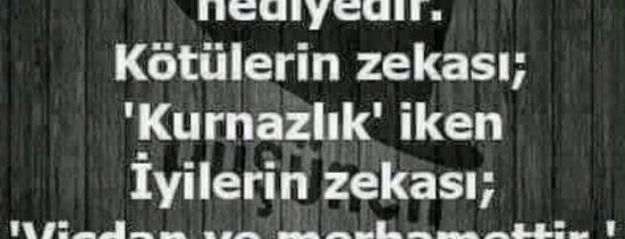 Coldwell Banker Elegant Gayrimenkul is one of Yılmazさんのお気に入りスポット.