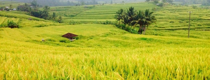 Jatiluwih Rice Terraces is one of Go Ahead, Be A Tourist.
