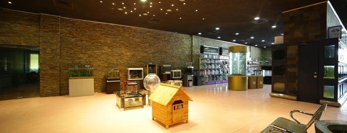 Joon Veterinary Clinic & Pet Shop is one of Nouf: сохраненные места.