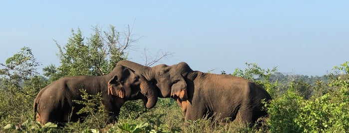 Udawalawa National Park is one of Lieux sauvegardés par Cynthia.