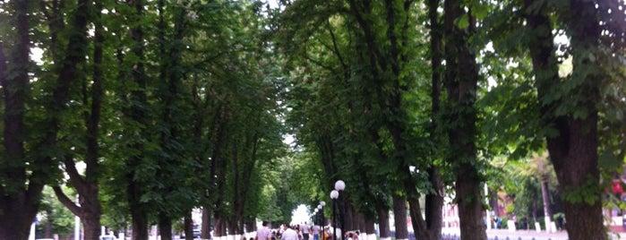 Алея на вулиці Пирогова is one of Olga : понравившиеся места.
