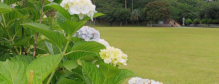 小塚公園 is one of 思い出の場所.