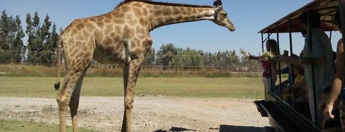 Parque Safari is one of Posti che sono piaciuti a Janeth.