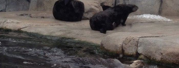 Sea Otter Watching-by MBA is one of Lugares guardados de Justin.