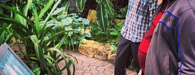 Atlanta Botanical Garden is one of Spring Break in Atlanta.