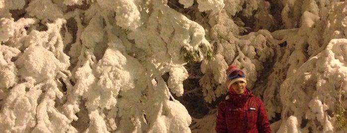 Хвалынский горнолыжный курорт is one of Locais curtidos por Юлия.