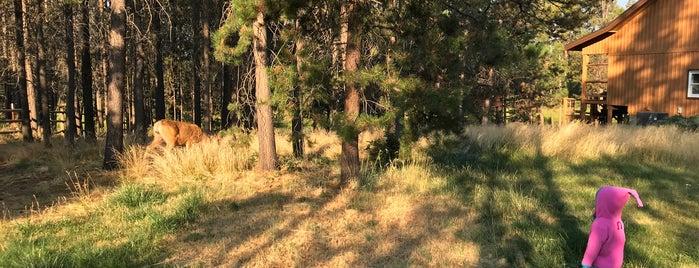 Deschutes Riverfront Retreat Sunriver oregon is one of Locais curtidos por Scott.