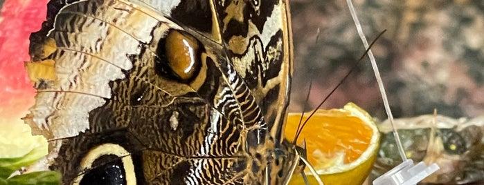 Kelebekler Vadisi Çiçek Bahçesi is one of Bir Gezginin Seyir Defteri.