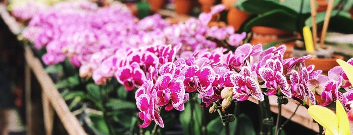 Orchid Fever Inc is one of Tempat yang Disukai Marianna.