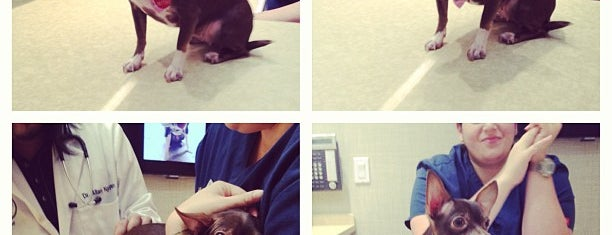 Chelsea Animal Hospital is one of Fav stuff to do with Louis.