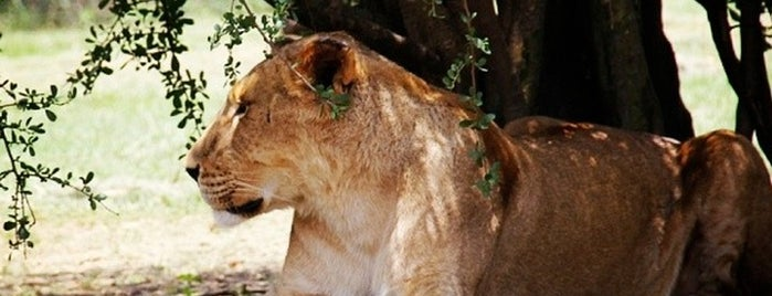 Drakenstein Lion Park is one of Cape Town: A week in the Mother City!.