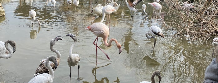 Flamingo Köy is one of İstanbul.