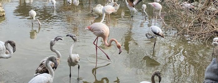 Flamingo Köy is one of Trakya.