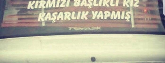 Evgin otel is one of Karadeniz turumuz (ciddim,cordum,cezdim).