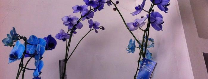 Floricultura Bem Me Quer is one of Locais curtidos por Vanja.