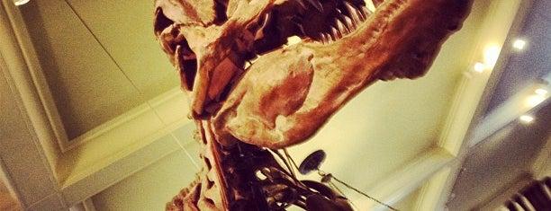 Museo Americano de Historia Natural is one of Manhattan Favorites.