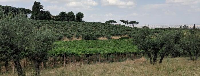 Minardi Winery is one of Posti che sono piaciuti a larsomat.