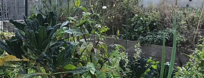 Alchemy Community Garden is one of To do.