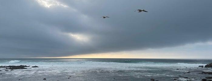 Asilomar State Marine Reserve is one of HWY1: Santa Cruz to Monterey/Carmel.