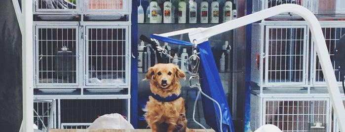 Pet para Pets is one of Lugares favoritos de William.