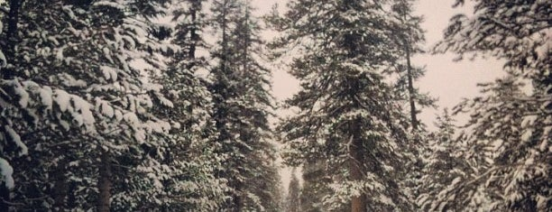 Stanislaus National Forest is one of National Recreation Areas.