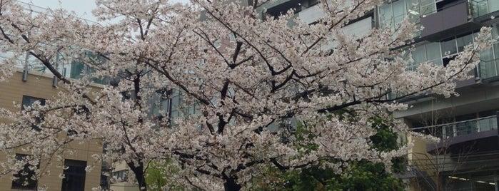 Hakozaki Park is one of Lugares favoritos de Shinichi.