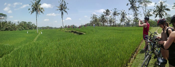 Bintang Mountain Cycling is one of Enjoy Bali Ubud.
