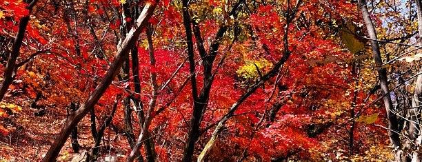 Bukhansan National Park is one of Korea.