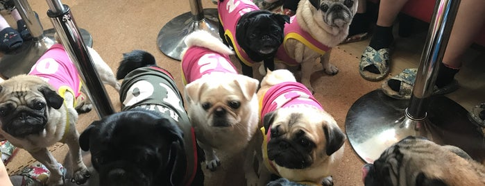 Living Room Pug Cafe is one of Asia.