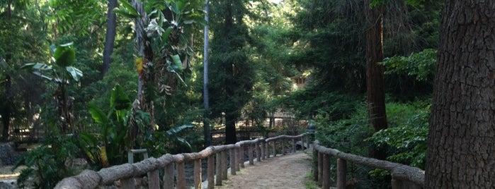 Ferndell Trail is one of LA   Next.