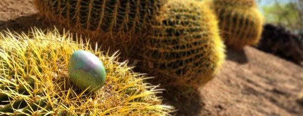 Cactus Garden is one of Las Vegas.