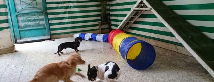 Dog Planet is one of Tempat yang Disukai Karla.