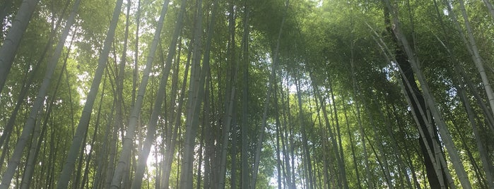 Arashiyama Bamboo Grove is one of Lieux qui ont plu à Nora.