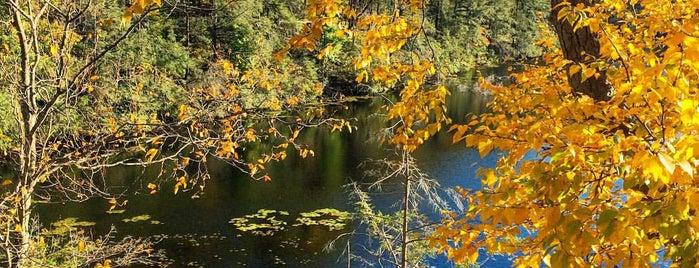Pelton Pond Picnic Area is one of Tempat yang Disukai Olga.