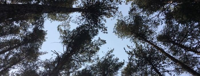 Çatacik Ormanlari is one of Eskişehir İlçeleri Gezilececek\Yenilecek Yerler.