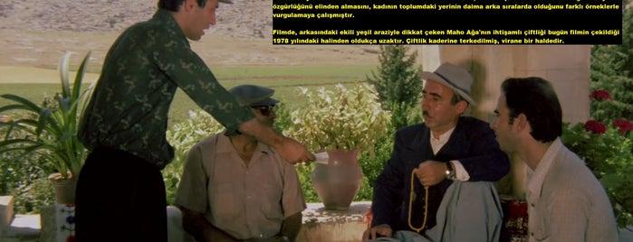 Fatih Aliye Müderris Çiftliği is one of Türk Filmlerinin Çekildiği Mekanlar.